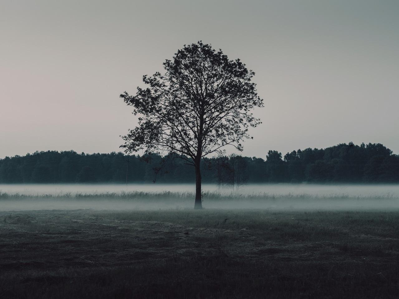 nature-sky-forest-fog